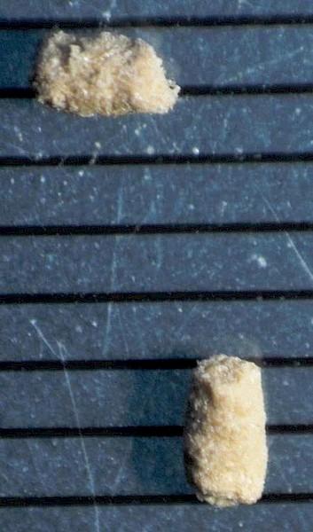 comment identifier les insectes du bois termite. Black Bedroom Furniture Sets. Home Design Ideas