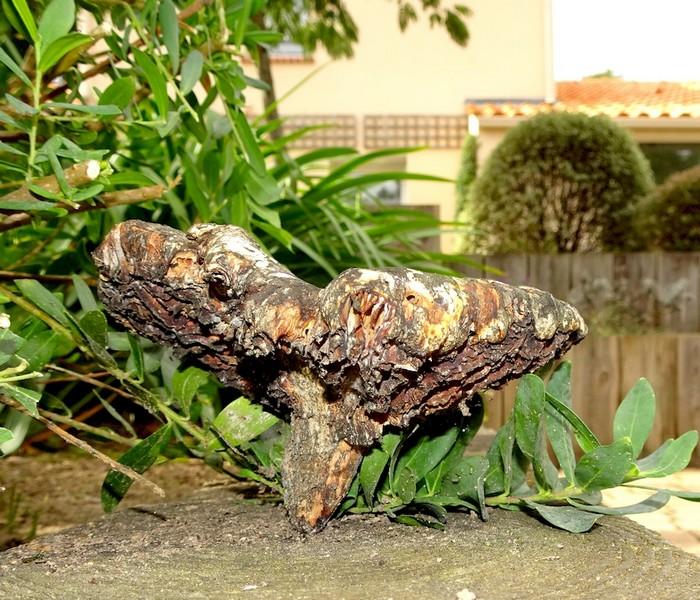 Le champignon lignivore m rule pleureuse polypore des caves - Champignon qui attaque le bois ...